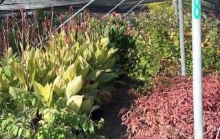 צמחים 105