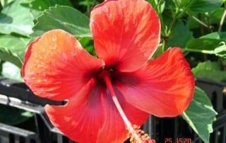 צמחים 106