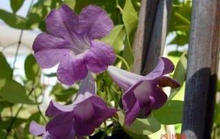 צמחים 107