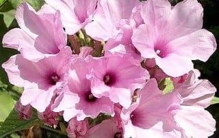 צמחים 109