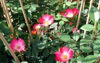 צמחים 120
