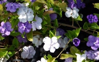 צמחים 123