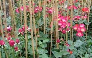 צמחים 127