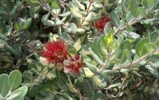 צמחים 131