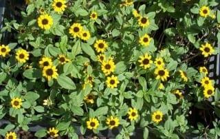 צמחים 135