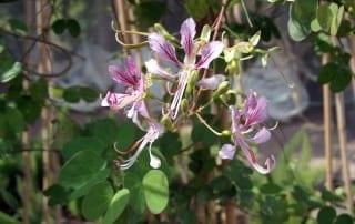 צמחים 136