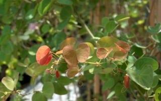 צמחים 137