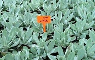 צמחים 138