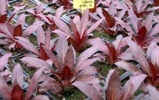 צמחים 139