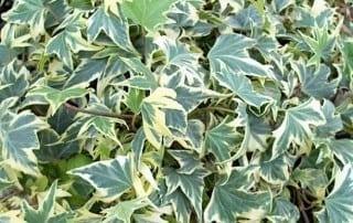 צמחים 140