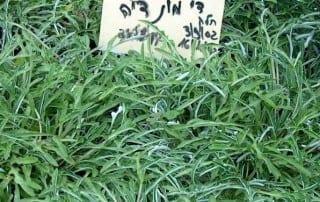 צמחים 142