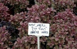 צמחים 144