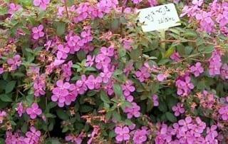 צמחים 145