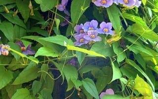צמחים 146