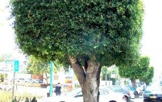 צמחים 147