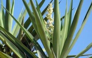 צמחים 148