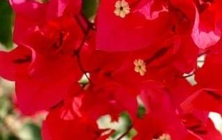 צמחים 154