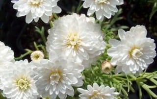 צמחים 155