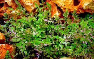 צמחים 159