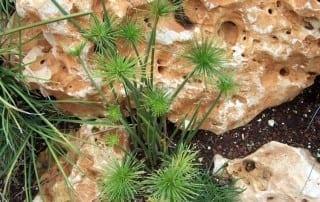 צמחים 161