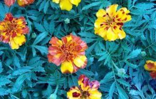 צמחים 163