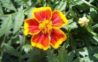 צמחים 164