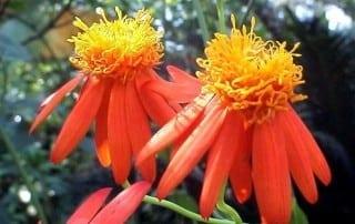 צמחים 165
