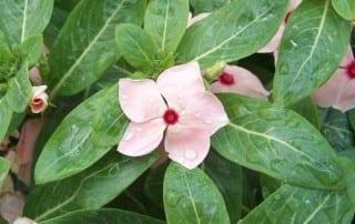 צמחים 166