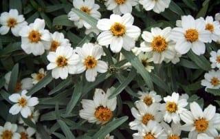 צמחים 167