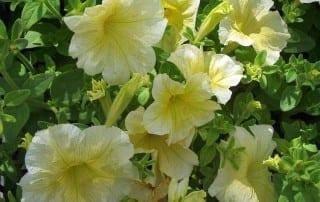 צמחים 168