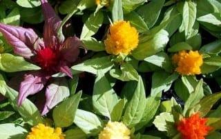 צמחים 169