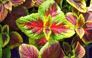 צמחים 170