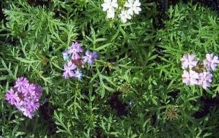 צמחים 171