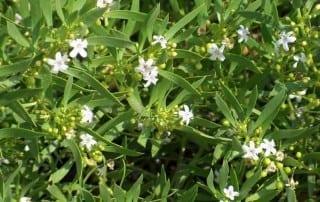 צמחים 173