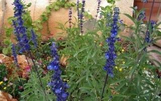 צמחים 175
