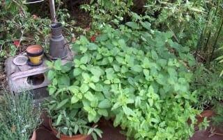 צמחים 177