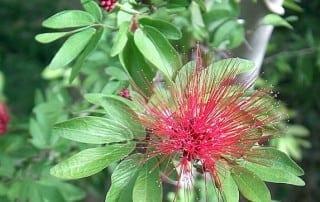 צמחים 178