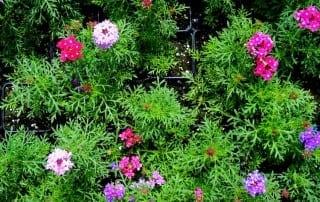 צמחים 185