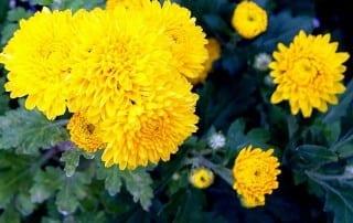 צמחים 186