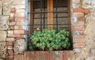צמחים 189