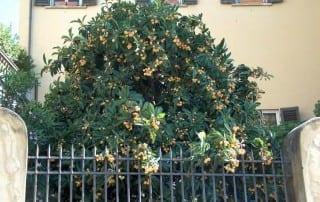 צמחים 191