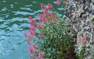 צמחים 194