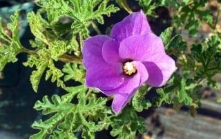 צמחים 200