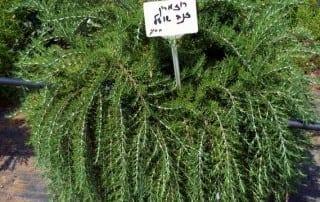 צמחים 201