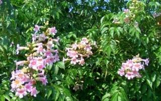 צמחים 203