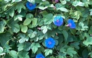 צמחים 204