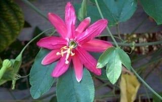 צמחים 205