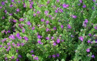 צמחים 208