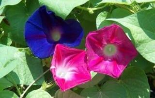 צמחים 210