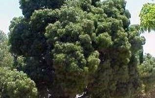 צמחים 213